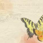 butterfly-976113_640_Web